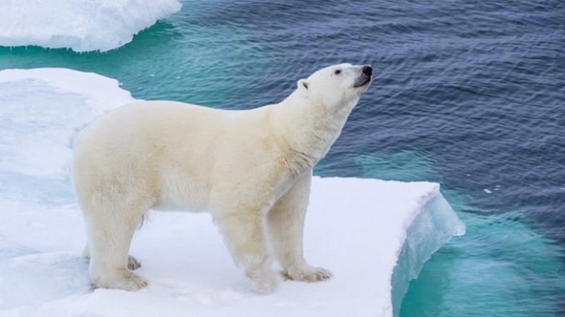 Çiftleşen kutup ayılarını rahatsız eden adama hapis cezası