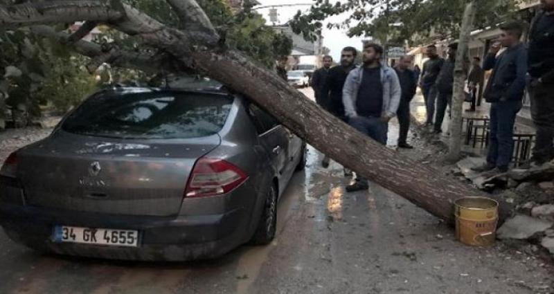 Vanda şiddetli rüzgarda ağaç otomobilin üzerine düştü