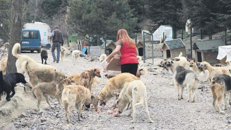 Her gün 500 köpeği besliyorlar